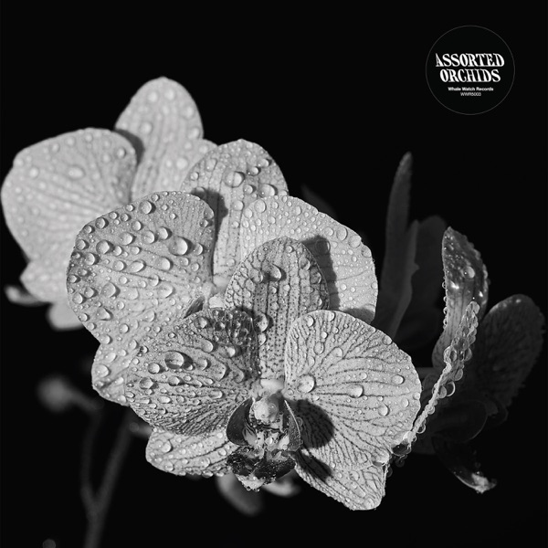Assorted Orchids - Assorted Orchids (2021)